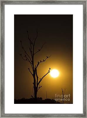 The Gathering Framed Print by Dennis Hedberg