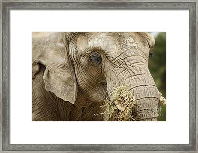The Gathering - Elephant At Work Framed Print by Inspired Nature Photography Fine Art Photography