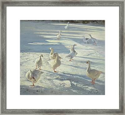 The Gathering  Framed Print by Timothy Easton