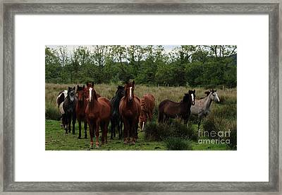 The Gathering Framed Print by Peter Skelton