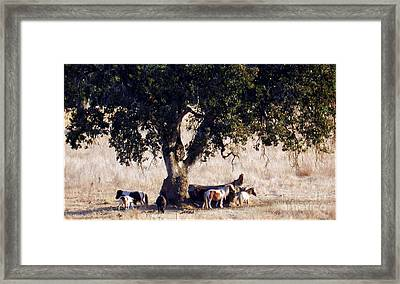 The Gathering Tree Framed Print by Julia Hassett