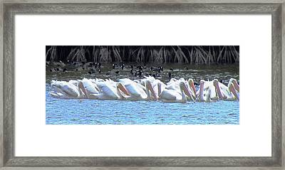 The Gathering Framed Print by Will Boutin Photos