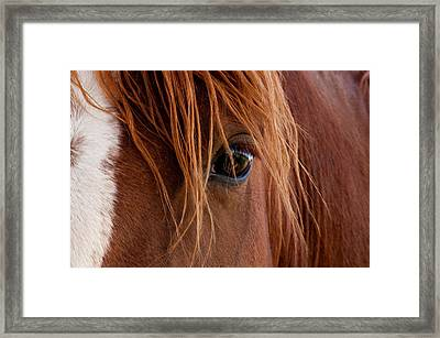 The Gentle Eye  Framed Print