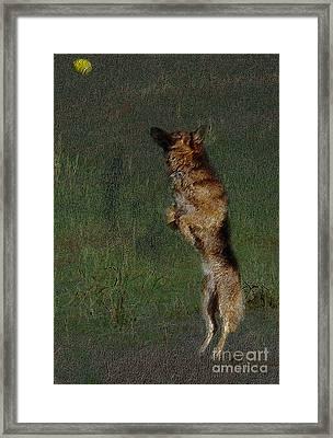 The German Shepherd Great Dog Framed Print by Manjot Singh Sachdeva