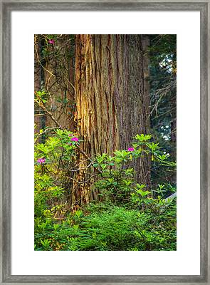 The Giant And The Flower Framed Print