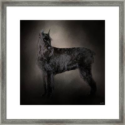 The Giant Black Schnauzer Framed Print by Jai Johnson