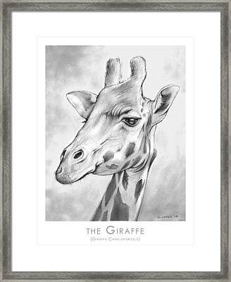 The Giraffe Framed Print by Greg Joens