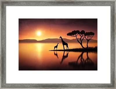 The Giraffes At Sunset Framed Print by Jennifer Woodward