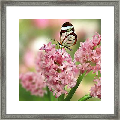 Framed Print featuring the mixed media The Glasswing by Morag Bates