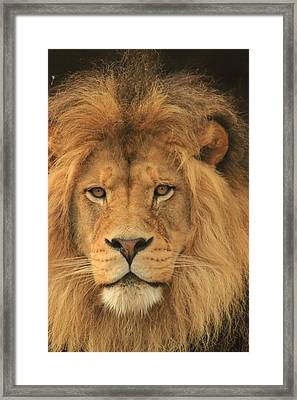 The Glory Of A King Framed Print