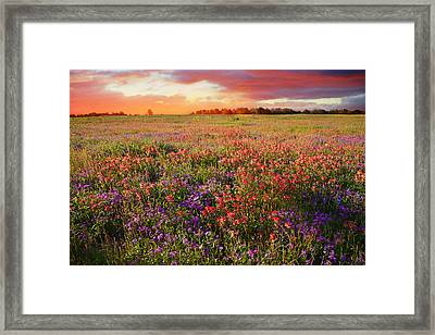 The Glory Of A Texas Sunset Framed Print by Lynn Bauer