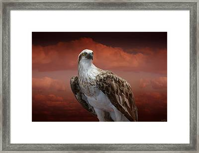Framed Print featuring the photograph The Glory Of An Eagle by Holly Kempe
