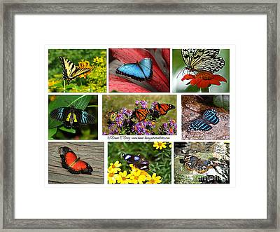 The Glory Of Butterflies 3 Framed Print by Diane E Berry