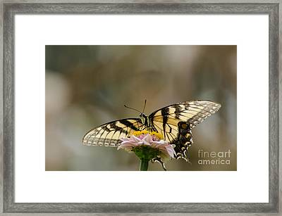 The Glow Through Nature Stain Glass Framed Print by Donna Brown
