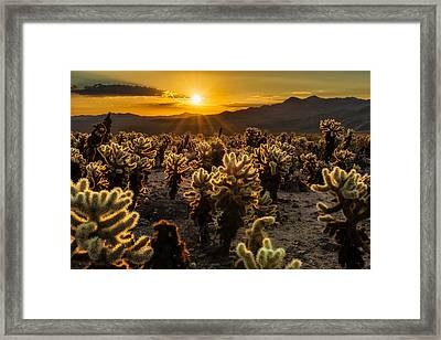 The Glowing Garden Framed Print by Guy Schmickle