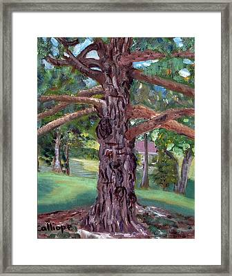 The Gnarley One Framed Print