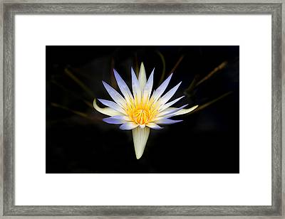 Framed Print featuring the photograph The Golden Chalice by Marion Cullen