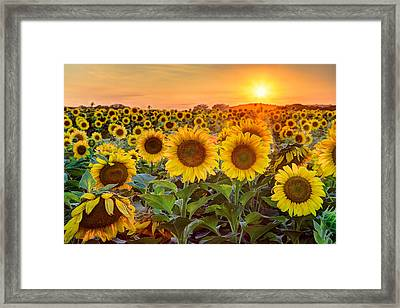 The Golden Hour Framed Print by Jill Van Doren Rolo