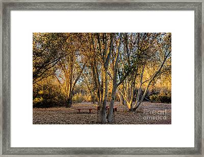The Golden Hour Framed Print by Tammy Espino