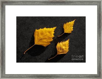 The Golden Leaves Framed Print