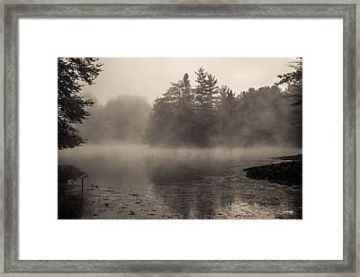 The Golden Pond Framed Print by Anthony Thomas