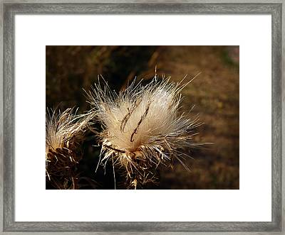 The Golden Present Framed Print by Lucinda Walter