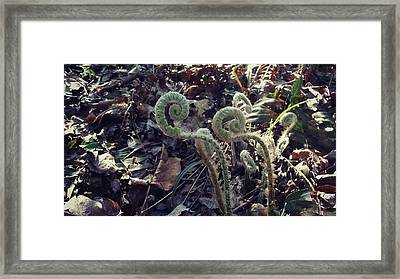 The Golden Ratio Framed Print by Molly Proud