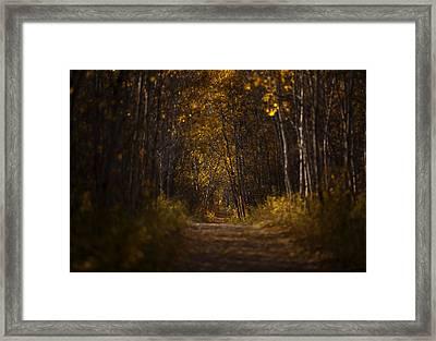 The Golden Road Framed Print by Stuart Deacon