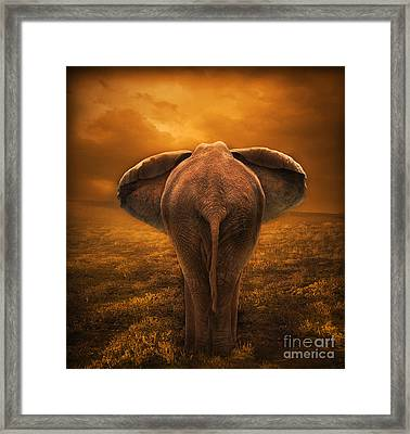 The Golden Savanna Framed Print by Lynn Jackson