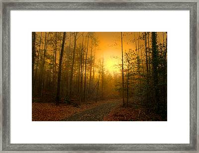 The Golden Touch Of Autumn Framed Print by Nina Fosdick