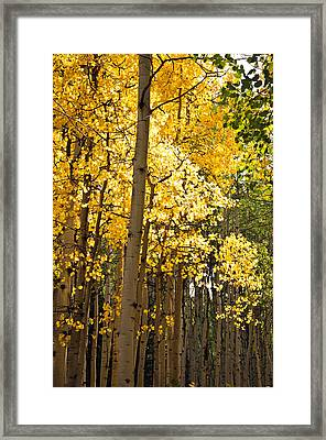 Framed Print featuring the photograph The Golden Tree by Eric Rundle