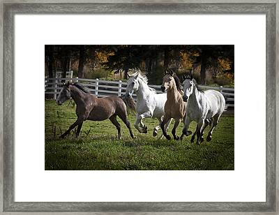 The Goldendale Four Framed Print by Wes and Dotty Weber