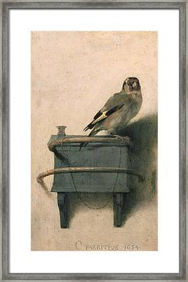 The Goldfinch Framed Print by Carel Fabritius