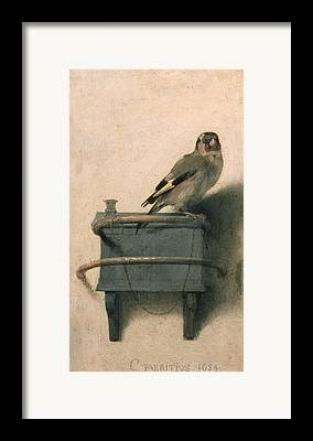 Finch Paintings Framed Prints