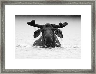 The Goofy Moose Framed Print by Jane Axman