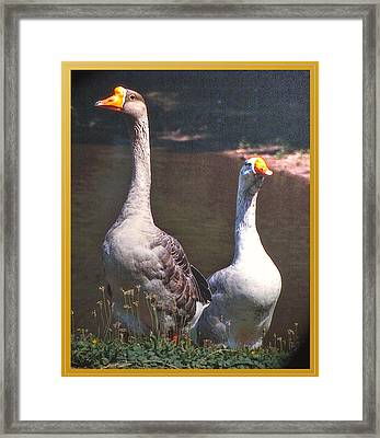 The Goose And The Gander Framed Print by Patricia Keller