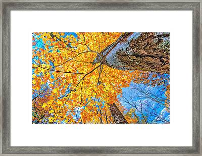 Framed Print featuring the photograph The Gorgeous Fall by Kimberleigh Ladd