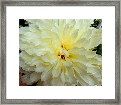 The Glow Of Gold Framed Print