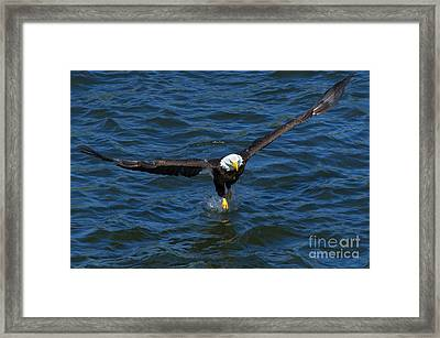 The Grab Framed Print by Mike Dawson