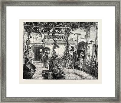 The Grape Harvest In Italy Framed Print