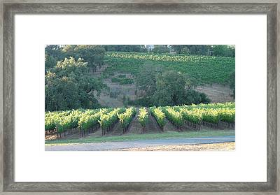 The Grape Lines Framed Print by Shawn Marlow
