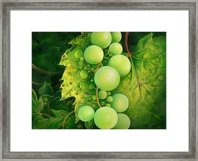The Grapes Framed Print by Anna Ewa Miarczynska
