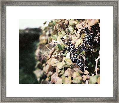 The Grapevines Framed Print by Lisa Russo