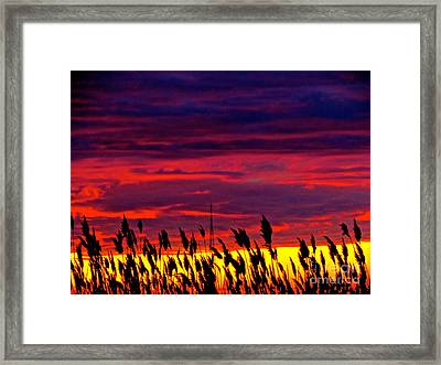 The Grasses Reach  Framed Print by Q's House of Art ArtandFinePhotography