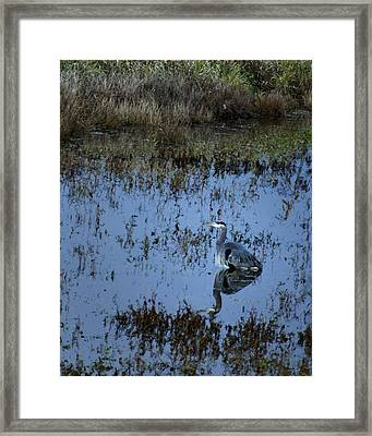 The Great Blue Calm Framed Print by Belinda Greb