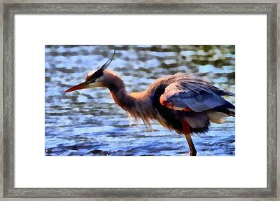 The Great Blue Heron Framed Print by Dan Sproul