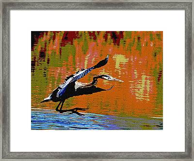 Framed Print featuring the photograph The Great Blue Heron Jumps To Flight by Tom Janca