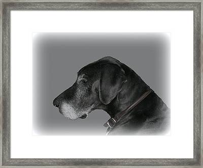 The Great Dane Framed Print