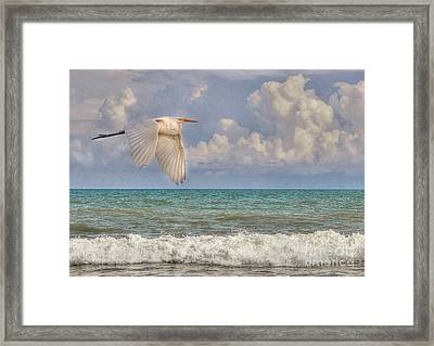 The Great Egret And The Ocean Framed Print by Kathy Baccari