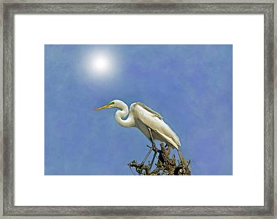 The Great Egret Framed Print